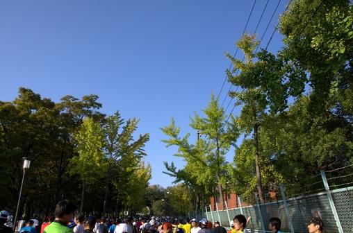 2013大阪マラソン 017.NEF.jpg